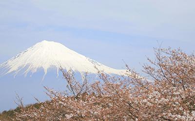 富士山駿河湾エリア観光PV岩本山公園